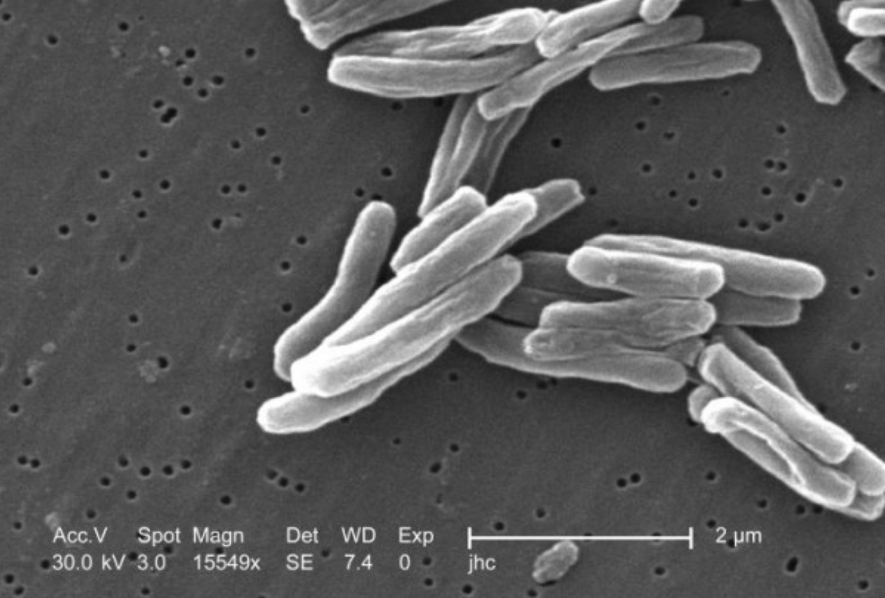 Bakteriotexte*